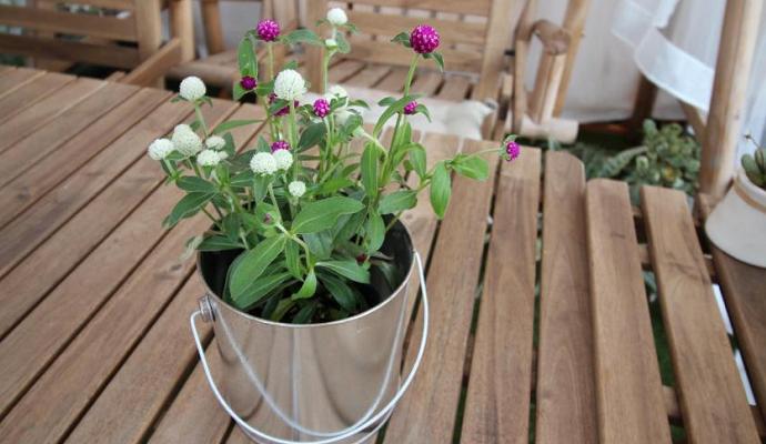特にプランターや鉢植えで育てる場合は、朝晩の水やりが欠かせないほど土がカラカラになってしまいます。真夏は水分を積極的に与えましょう。