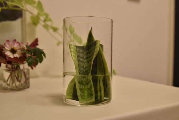 土挿しと同じように葉の生長する方向を上にして水に入れてください。