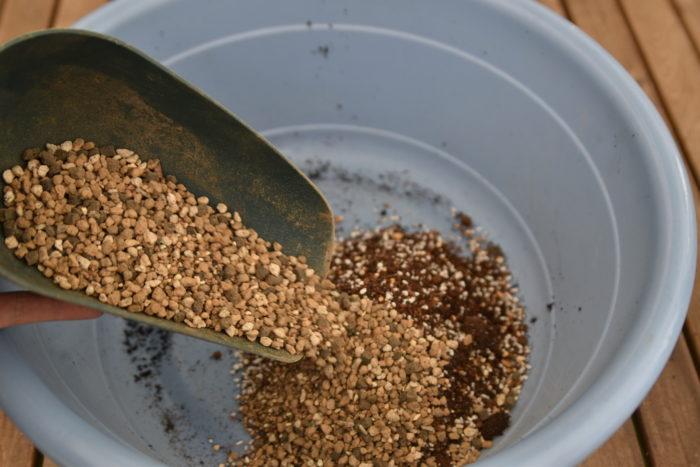 クワズイモの植え替え用の土