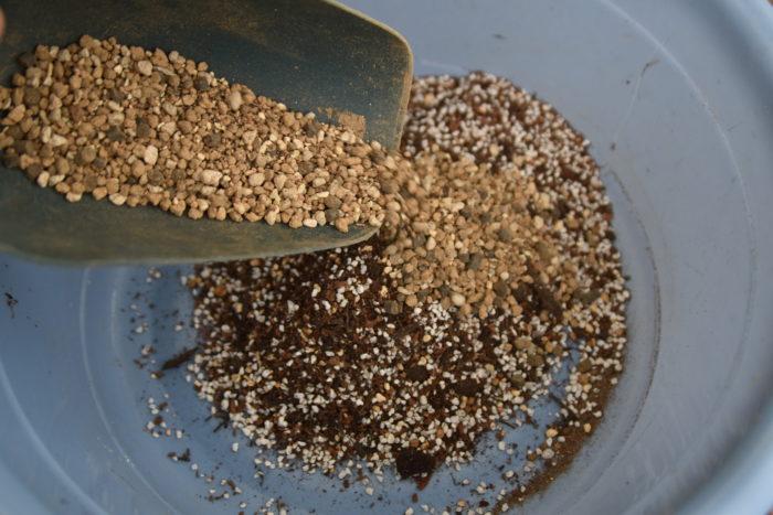 ベンジャミン・バロックの植え替え用の土