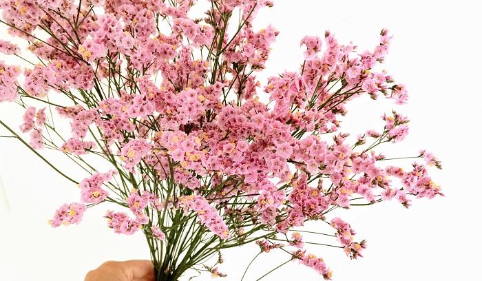 スターチス  カサカサした花がドライフラワーに最適な切り花。