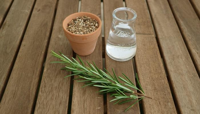 ローズマリー、ハサミ、水揚げ用のコップ、挿し穂を植え付けるための鉢(挿し木トレーでも可)、土。