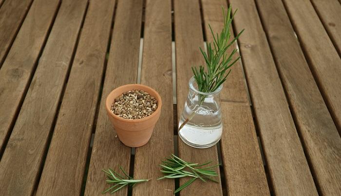 ローズマリーの枝をカットしたら、土に挿す部分の葉(カットした部分から3分の1ほど)は手で取り除きます。葉が付いたままでは挿しにくいのはもちろん、葉が土の中で腐ったり、雑菌の繁殖に伴って枯れにつながるなど、いい影響はありませんので取り除きましょう。ちなみに、取り除いた葉は塩と混ぜてローズマリーソルトにしたり、オリーブオイルに入れてローズマリーオイルなどに使うのもオススメです。