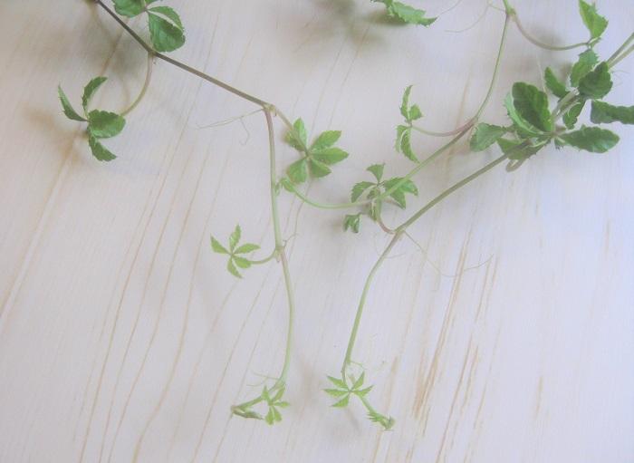 土の表面が乾いたら、たっぷり水をあげましょう。土が湿った状態のまま水をあげてしまうと根が腐り、枯れる原因になります。受け皿や鉢カバーに水が溜まっている状態も良くありません。受け皿や鉢カバーに溜まった水は必ず捨てましょう。  また、夏の暑い時期は時々葉水を与え葉っぱを潤わせましょう。霧吹きでシュッと葉っぱに水分を吹きかけてあげればOKです。葉水をすることは、病害虫予防にもなります。  一方、寒い時期は水やりの頻度を控え、土が乾いたらあげましょう。