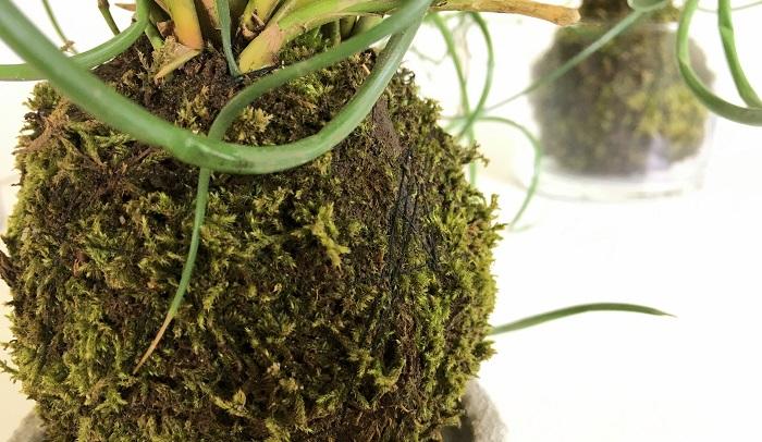 ⑦苔がはがれないよう糸でぐるぐると巻きつけて固定したら完成です!