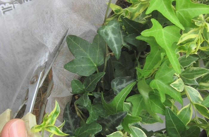土が入ったら、リース型から飛び出している不織布をリース型から1~2cm外側に残してカットします。