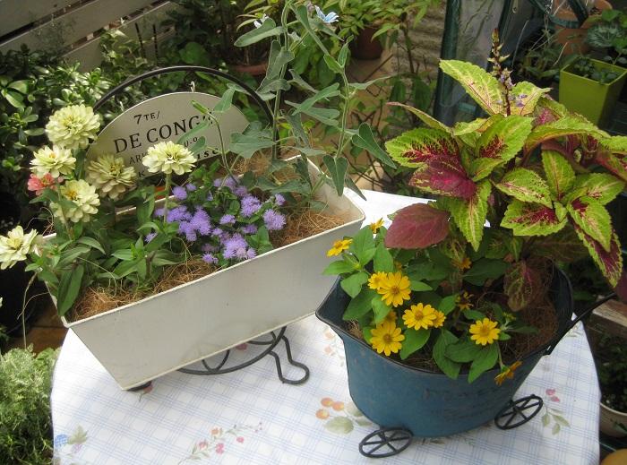 ココヤシファイバーを株元にふんわり置くと、それだけでお花屋さんで売っているようにかわいく飾れるのでおすすめです。