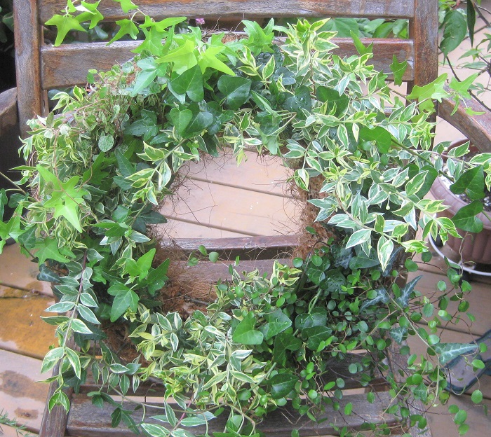 今回は、アイビー4種類を株分けして組み合わせ、その他のリーフ類と一緒に「ギャザリングを意識した方法」で植えました。リースの中にリーフ類を細かくちりばめることで、本当は作ったばかりなのに、植え付けてから少し時間がたって、隣り同士の草花が馴染んでふんわりとしてきた頃の姿に見えますよね。小さな葉っぱの繊細なグラデーションが美しいとても爽やかなリースです。メンテナンスも簡単なのでぜひ作ってみてください。