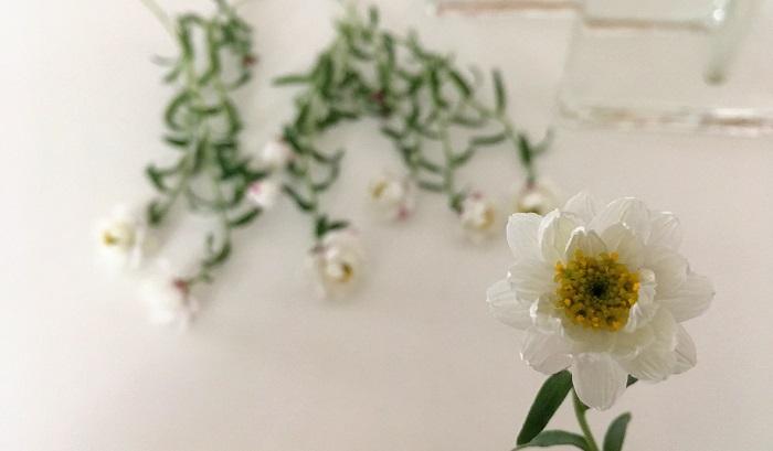 花かんざし  ドライフラワーにする前からカサカサした不思議な手触りの花。花だけを使ってレジンのアクセサリー作りにも使えます。