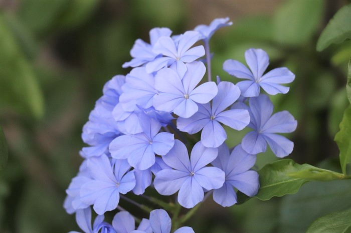 こんな風に花が咲きます。