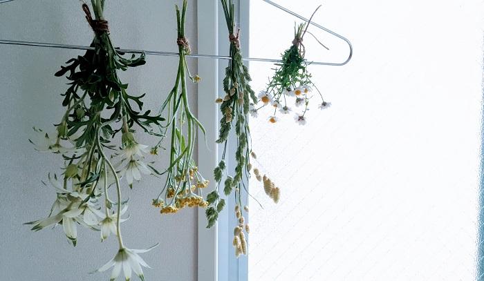 今回は一番簡単な吊り下げて乾燥させる方法をご紹介します。  ドライフラワーを作る3つのポイント ①フレッシュなうちに吊り下げる。  お花を楽しんでからドライフラワーに...ではダメです! 摘み取ってすぐの新鮮なものを使いましょう。  ②水分が多そうなものは1本で吊るす。  水分が多そうな花や花束になっているものは、束にして吊るすより1本で吊るした方が乾燥するのが早く綺麗な仕上がりになります。  ③風通しの良い所に吊るす。  締め切った部屋だと乾燥に時間がかかるので出来るだけ風通しの良い所に吊るしましょう。