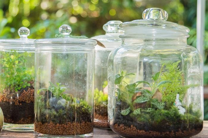 テラリウムは蓋をしたガラス容器の中で植物を育てるものです。起源は19世紀に発明された「ウォードの箱」。中に入れる植物は観葉植物から苔まで幅広く楽しめます。すでに出来上がった状態のものを買ってくれば、置くだけで楽しむことができますし、自分で作ることもできますよ。