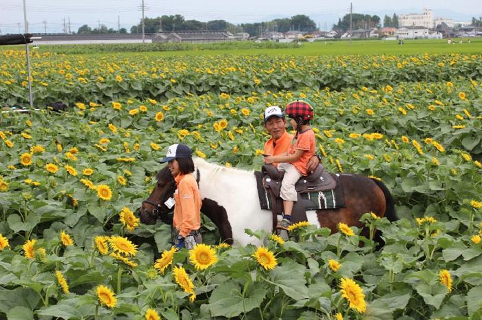 ▼29日・30日は、ポニーの乗馬体験ができます。