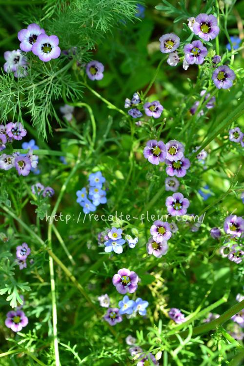 パラパラと種をまいたあとは発芽を待つのみ。手に入りやすい種なら、1袋200~300円くらいで手に入ります。芽が出てくるまで、発芽した瞬間、初めての一番花から満開になる過程と、苗から育てた時とは違った喜びを味わえます。  もし発芽しなかったら?・・・年明けから上記の苗が出回ります!気軽な気持ちで、まずは直まきの種まきをチャレンジしてみませんか?