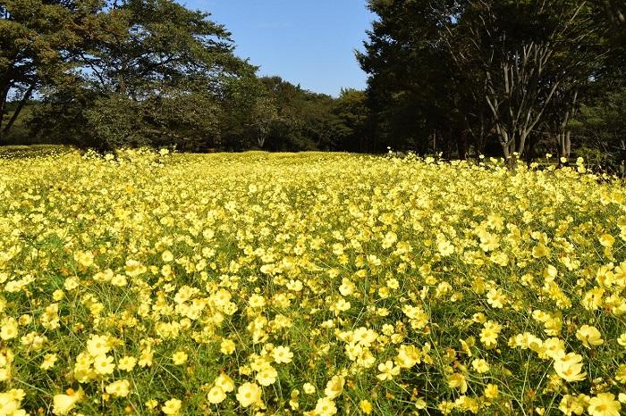 画像提供:国営昭和記念公園    イベント情報をくわしくみる!
