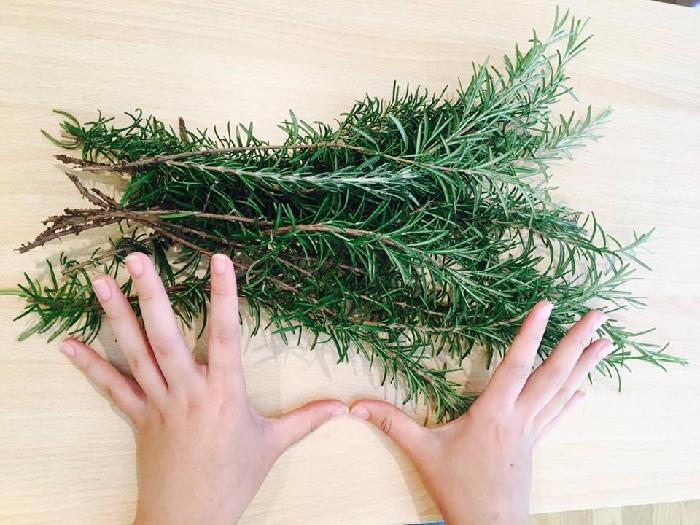 ハーブを刈りとるときは、茎の長さが足りないと、うまく作れないことがありますので、できるだけ根元から刈りましょう。