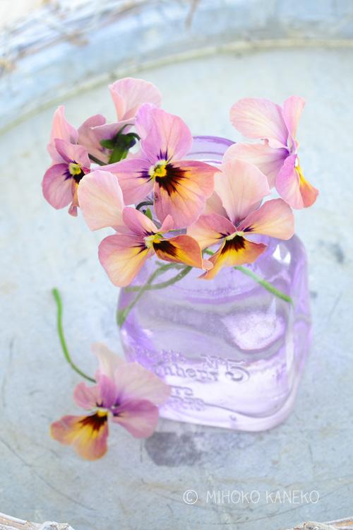 4月以降のビオラの花茎が伸びてくるシーズン最後は、切り花として楽しむこともできます。