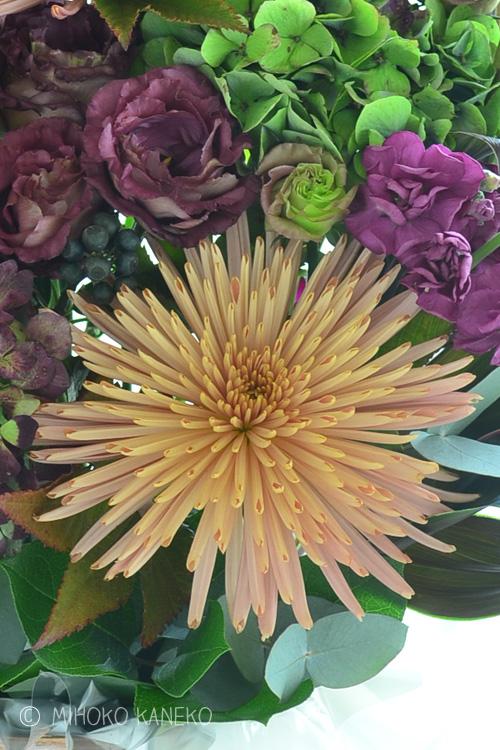 大輪の花は、マム(菊)です。こちらはアナスタシアシリーズ。通年出回っているマムですが、最近はこんな大人っぽい色のマムもあります。  マムの上のグレープ色の花は、トルコキキョウ。トルコキキョウは、とても日持ちがよいので、夏におすすめの花材です。最近は、色のバリエーションが豊富で、茶系や紫系など、大人っぽい色、秋の色合わせに似合うトルコキキョウもたくさんでてきました。