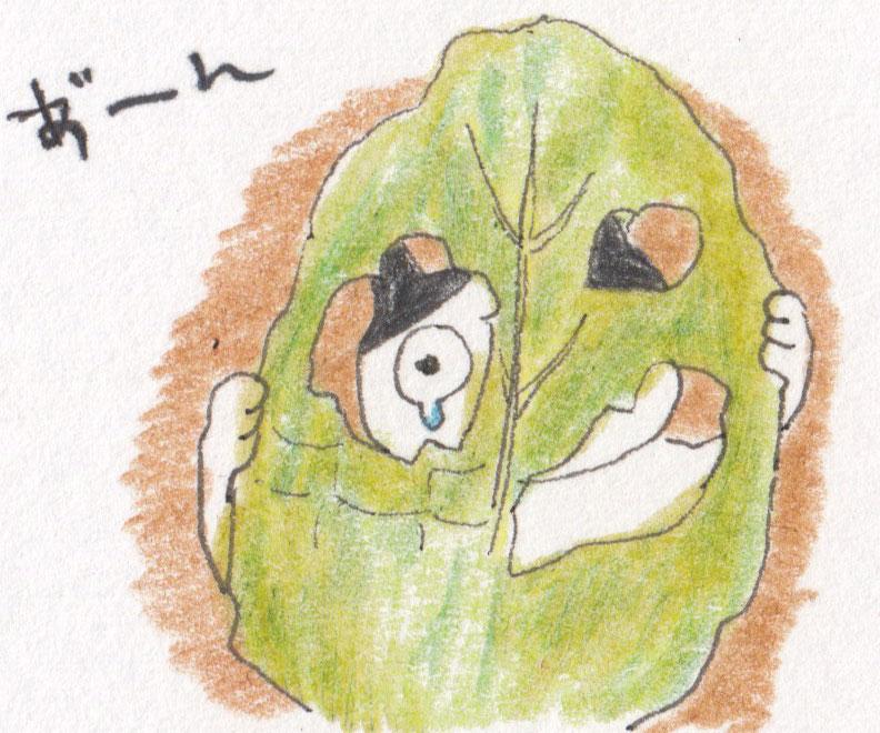 ヨトウムシとは、ガの幼虫です。成長した幼虫が夜に葉を食害することから、夜に盗む虫「ヨトウムシ(夜盗虫)」と呼ばれるようになりました。  主な発生時期は、5~11月です。  成虫であるヨトウガが、葉の裏に卵を産みつけます。孵化した若い若齢幼虫は、葉の裏から食害します。そのため、葉の表側が残るため、葉がカスリ状になります。  成長するに従い、食欲旺盛になりますので、ヨトウムシ1匹でも壊滅的な状態になってしまいます。  葉の上に濃緑黒色のフンを見つけたら、葉の裏や、株元の土の下1cm位の深さを、箸などで探ってみると見つかります。