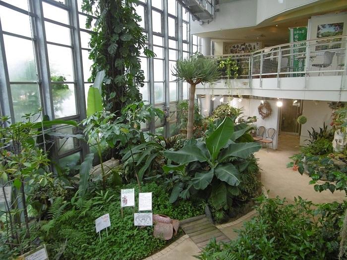 渋谷に植物園があることをご存じでしょうか。渋谷区ふれあい植物センターは、都会のまんなかにある日本で一番小さい植物園です。施設はすべて屋内で、グリーンガーデン(温室)・企画展示ホール・ハーブガーデンなどに分かれています。約500品種の植物があり、入園料も一回100円とリーズナブルなので気軽に何度でも立ち寄りたい植物園です。
