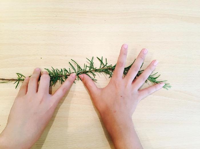 下葉がついていると、スティックを作るときに邪魔になってしまうので、茎の半分だけローズマリーの葉が残っている状態にします。