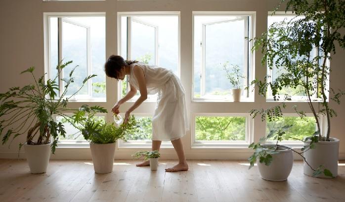 水やりは「土が乾いたらたっぷりと」が原則  表面の土や鉢底の土を触ってみたら乾いている。これはわかりやすいですね。しかし、内側まで乾いているかは分かりにくいもの。割りばしなどを土に挿してみて、抜いた時に湿っていたら中の土は湿っている証拠。指で表面の土を(植物に影響のない程度で)掘り返してみても良いと思います。  基本的には「鉢の底から水が滴ってくるまであげること」をたっぷりと、と表現します。水が鉢底まで滴ってきている=鉢全体に水がいきわたっている、ということですね。さらっと水をあげただけだと、表面しか湿らず、肝心の根がある底の部分まで水がいきわたりません。水が足りないと枯れる原因になります。  基本的に水やりは「乾いたらたっぷりと」しますが、たまに乾燥が大好きで乾いてから数日は水をやらない植物や、水が大好きで乾いたら枯れてしまうので乾く前にあげ続ける植物もあります。そういった特殊な植物は育て方に記載されていると思うので、まずは「乾いたらたっぷりと」で育ててみましょう。