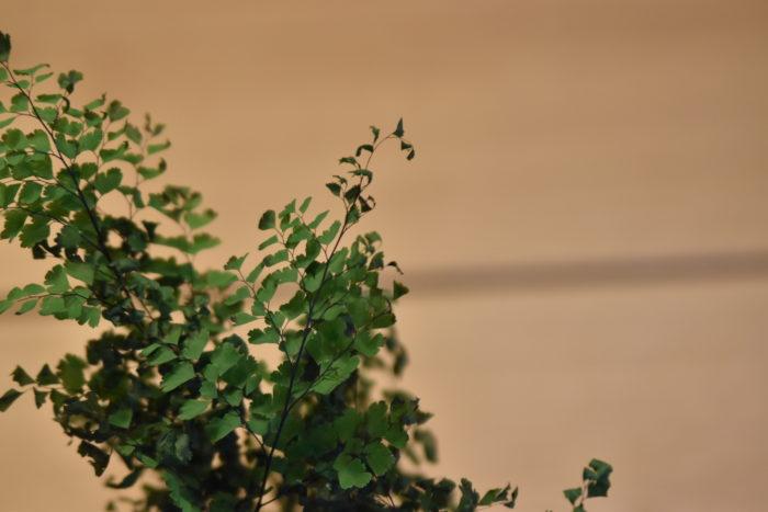 葉先だけが枯れていて他は大丈夫な葉も刈り取ってしまいます。