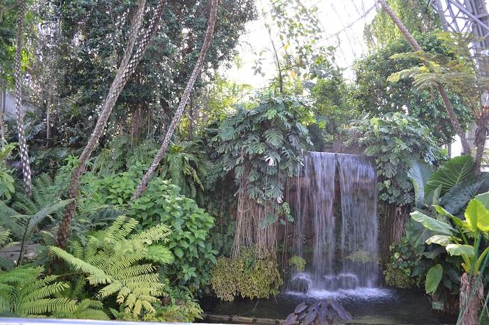 画像提供:夢の島熱帯植物館