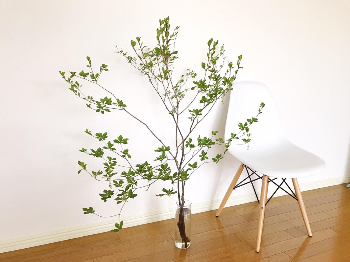 インテリアとも相性のいい枝物のドウダンツツジ。このように白いイスの隣に置くだけで、絵になりますね。