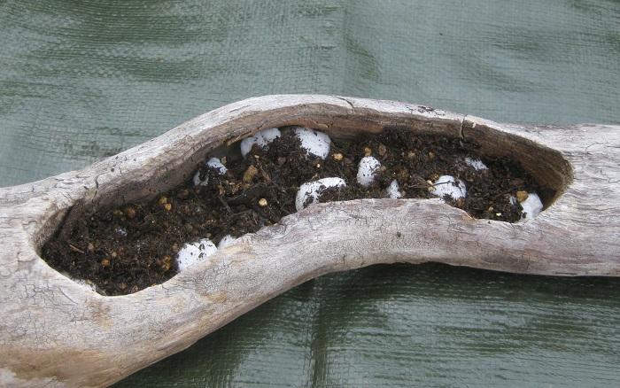 流木に穴を空け、その中に土を入れて寄せ植えします。(元々寄せ植えできるように穴が開いている流木もあります。)