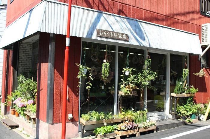 『しろくま生花店』は、店内には生花のみならずドライフラワーもたくさん。吊るされているものだけでなく、リースなどアレンジメントも販売されています。わくわくしてもらえるような、少し個性的なお花が店内で目立ちます。