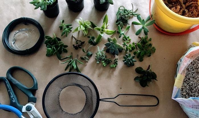 ぷっくりとした姿が可愛い多肉植物のリースを作ってみたい! だけど、リース作りは難しそう…。そんな方、必見です。100均で購入したキッチン道具の水切りざるを使って、簡単に作れる多肉植物のリースをご紹介します。