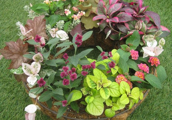 今月のテーマは「育てる秋色」  植え付け後は、どれぞれの苗が成長していきますが、その成長の向きやボリュームを想像しながら、どの向きに植えたら美しいリースの形を保てるか、それぞれの苗の良さを引き立たせることができるかを考えながら植えつけましょう。  秋色を意識してセレクトした植物たちが、秋が深まるにつれてどのように育ち、彩りが変化していくか楽しみですね。  見る角度によって、違う秋色を楽しめるリースを作っていきます。