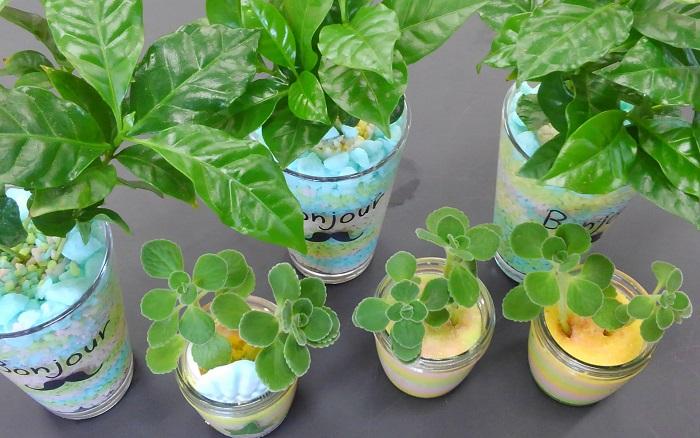 夏の学校で小学生達と一緒にグリーンインテリアを作ったことがあります。メインのグリーンインテリアを作る前に、練習として小さい器にアロマティカスの挿し芽を作ったのですが、子供たちはメインのグリーンインテリアと同じくらい、アロマティカスを気に入ってくれました。アロマティカスの香りとプニプニした可愛らしさが大人気でした♪