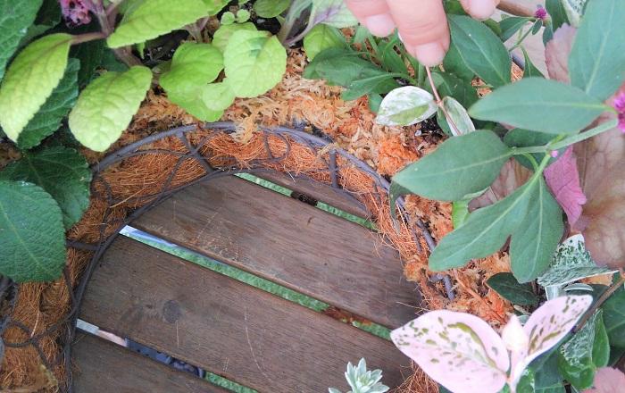 内側は、手でやさしく茎をよけて、しっかりと水苔をはります。