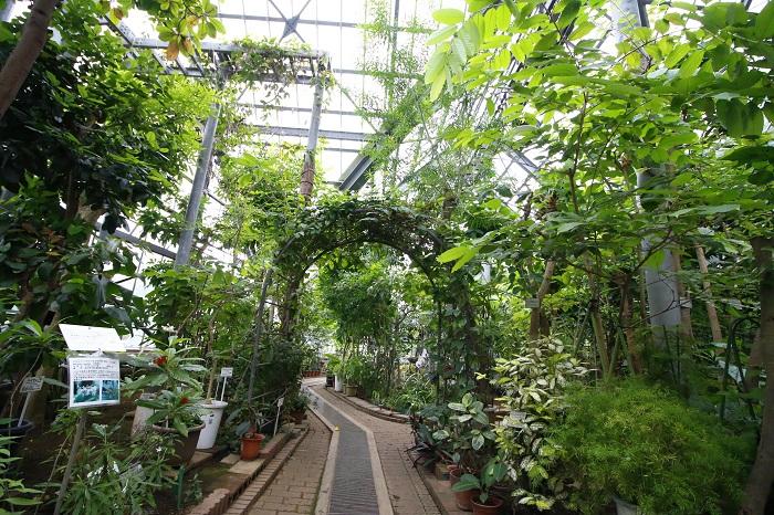 ▼温室では、熱帯・亜熱帯で生きる薬用植物を見ることができます。ヒスイカズラやヤコウカなどの花も魅力。