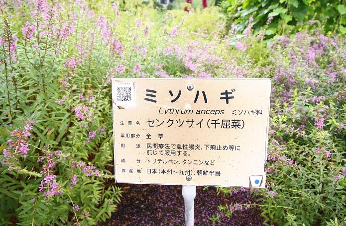 ▼一つひとつの植物に対して、名前や分類だけでなく効能・毒性・薬用部位などの説明があるのも楽しいポイントです。
