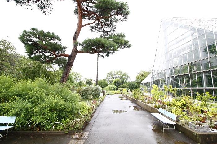 都立薬用植物園は、ちょっと珍しい特徴のある植物園です。漢方医学や民間療法・現在の製薬に使われる植物などを栽培・展示しています。またアヘンの原料となるケシや身近に見られる毒のある植物などもあります。私たちの暮らしに欠かせないお薬のもとの姿を感じることができる植物園です。