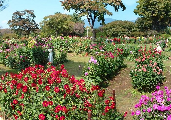 群馬県前橋市にあるぐんまフラワーパークは、四季折々の花を楽しめるお花のテーマパーク。