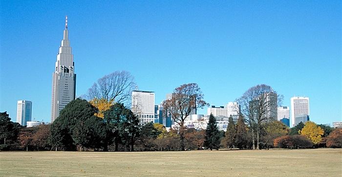 autumn008_shinjukugyoen 1