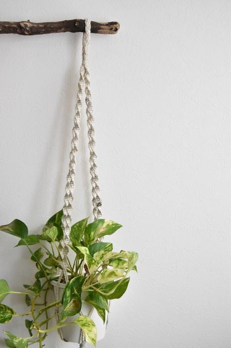 流木などに引っ掛けて飾るのも雰囲気が出ます。  お気に入りの鉢にいれたり、透明な鉢に入れて根の張りを見せるなどしてみてはいかがでしょうか?  また、マクラメの編み方でも雰囲気がグッと変わってくるので、いろいろなプラントハンガーを試して使ってみるのも面白いのではないでしょうか。  マクラメなどで吊るす場合は鉢が落ちてこないようにしっかりと固定してください。水やり直後の鉢は土が水を吸収して重くなっているので注意が必要です。