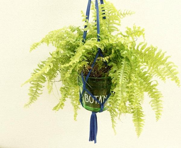 シデ植物の仲間であるツデーは、やはり湿った環境を好み、耐陰性も高いです。水分が足りない場合、やはり葉が落ちてしまうので、水分はたっぷり与えましょう。