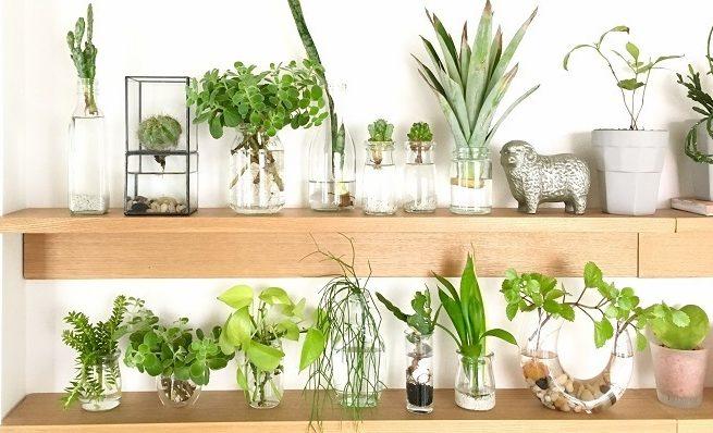 実例で紹介できなかったおしゃれなインテリアグリーンのお写真も、まだまだたくさんあります。インスタグラムの#ラブグリですてきな花・植物のある暮らしのお写真を投稿されている方をぜひチェックしてみてくださいね。