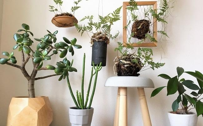 暮らしにうるおいをくれる観葉植物 季節を通して、暮らす部屋だから置くインテリアや家具をこだわりたい。料理をつくる食器やご飯を食べるテーブルも素敵なものがいいですよね。そんな生活の場にあると、より暮らしを豊かにしてくれるのが花やグリーン。  インテリアや家具に合うグリーンを置くことで、とてもあたたかい空間になります。インテリアグリーンとして活躍する観葉植物たちは空間づくりをしてくれるだけでなく、暮らしにうるおいをもたらしてくれます。