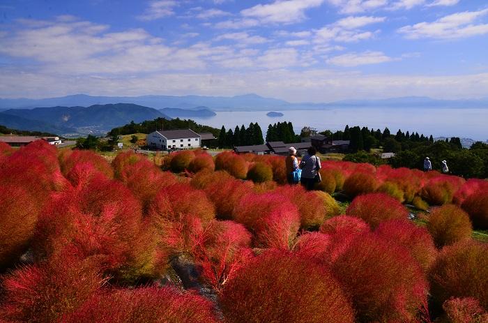 画像提供:箱館山スキー場/びわこ箱館山ゆり園  箱館山コキアパークは、箱館山スキー場のびわ湖側の丘に位置し、今年で開園5周年を迎えます【2013年7月開園】。