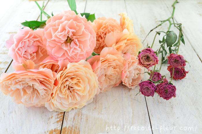 スプレーバラの生花と、それをドライフラワーにしたもの。花によって差がありますが、ドライフラワーにすると、色が濃いめになり、花のサイズも縮みます。色の変化は、白っぽい花はベージュ・茶系に、赤は黒っぽい赤になったりと、元の色とは違った色に変色します。