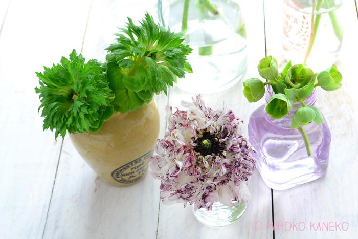 ラナンキュラスは、気温や光に反応して少しずつ開く性質です。開いてくると花の重みで茎が折れやすいので、少しずつ切り戻していくとよいです。完全に開いてきたら、短めにして生けるのがおすすめ。