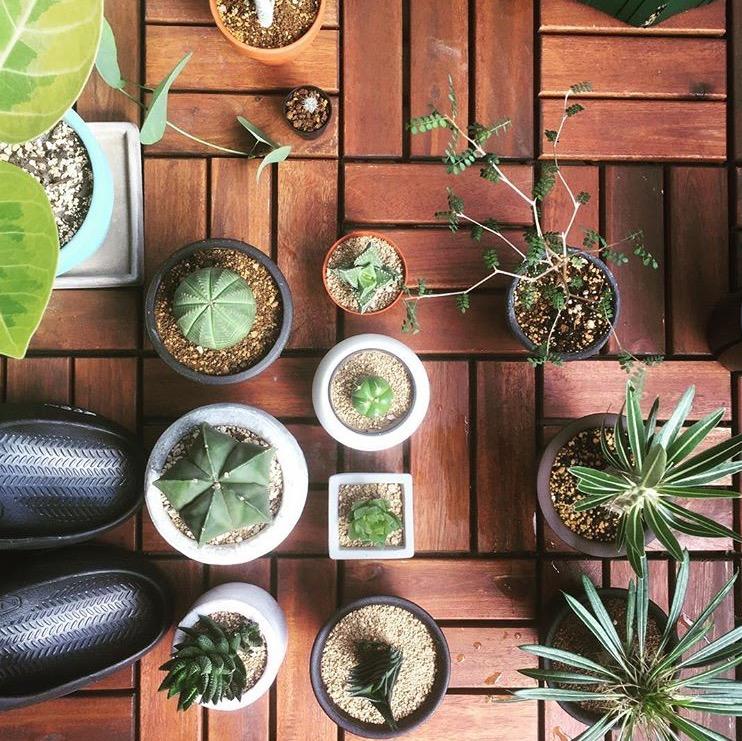 上から見ても美しい植物たちの姿。おしゃれなウッドタイルの上で、新鮮な風を浴びている姿は心地よさそうです。@exp0222 さん提供
