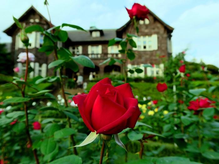 東京都北区にある旧古河庭園は大正時代に造られた洋館と、洋風庭園のバラが美しく映える、普通のバラ園とは一味違った美しさを楽しめる庭園です。この庭園は古河家3代目当主・古河虎之助の手によって造られ、洋館と洋風庭園は鹿鳴館などで有名なジョサイア・コンドル設計によるものとなります。