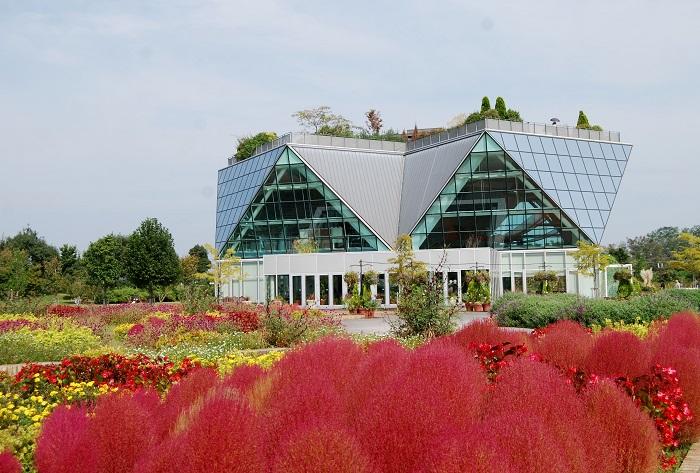 画像提供:フラワーパーク江南  「江南花卉園芸公園(こうなんかきえんげいこうえん)」という名前が、フラワーパーク江南の正式名称。四季折々のお花が楽しめる公園です。コキアは9月上旬~9下旬が緑色で、紅葉は10月上旬からだそうです。